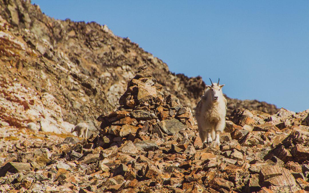 Trip Report; Torreys Peak